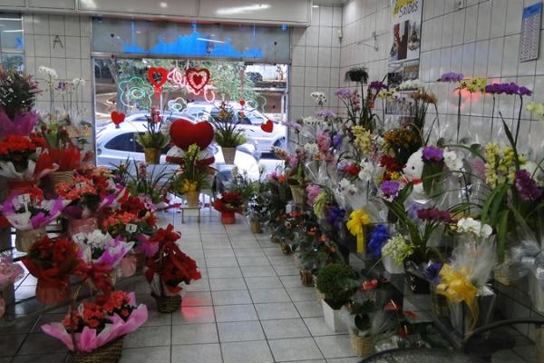 loja-flores-martinho-4487DF4FA-D02D-F8BE-E0B9-B2AF532B2F60.jpg